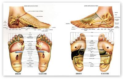 Formations de réflexologie