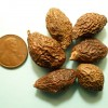 Fruit de la Scaphiglotte en médecine chinoise
