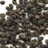 Bu Gu Zhi : le fruit de Psoralea corylifolia L.