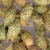 Fruit de xanthium : Cang Er Zi