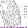 Le point Shi Dou du méridien de la rate (17Rt)