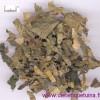 Propriétés de la feuille du mûrier blanc (Sang Ye)
