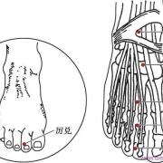 Le point Li Dui du méridien de l'estomac (45E)