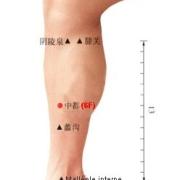 Le point Zhong Du du méridien du foie (6F)