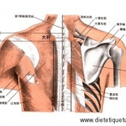 Le point Da Zhu du méridien de la vessie (11V)