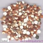 Qian Shi : la graine d'Euryale