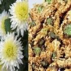 La fleur de chrysanthème dans la pharmacopée chinoise