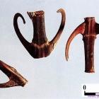 La liane Gou Teng (Uncaria rhynchophylla)
