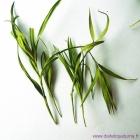 Feuille de bambou (Dan Zhu Ye)