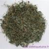 Tout savoir sur Jiaogulan, l'herbe de l'immortalité
