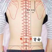 Le point Shen Shu du méridien de la vessie (23V)
