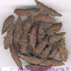 Le rhizome du souchet rond (Xiang Fu)