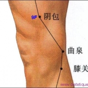 Le point Yin Bao du méridien du foie (9F)