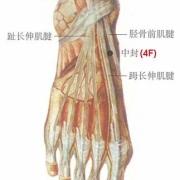 Le point Zhong Feng du méridien du foie (4F)