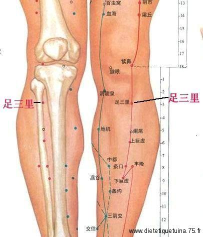 Vue en détail du point Su Zan Li du méridien de l 'estomac