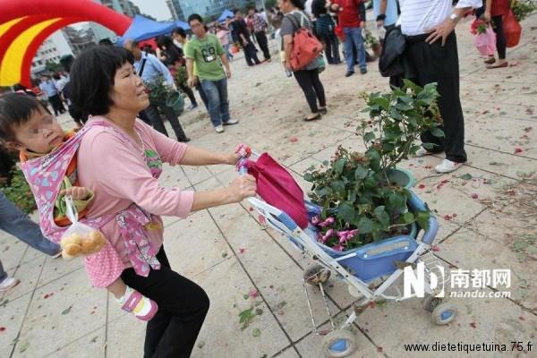 Transportation d'azalées en Chine