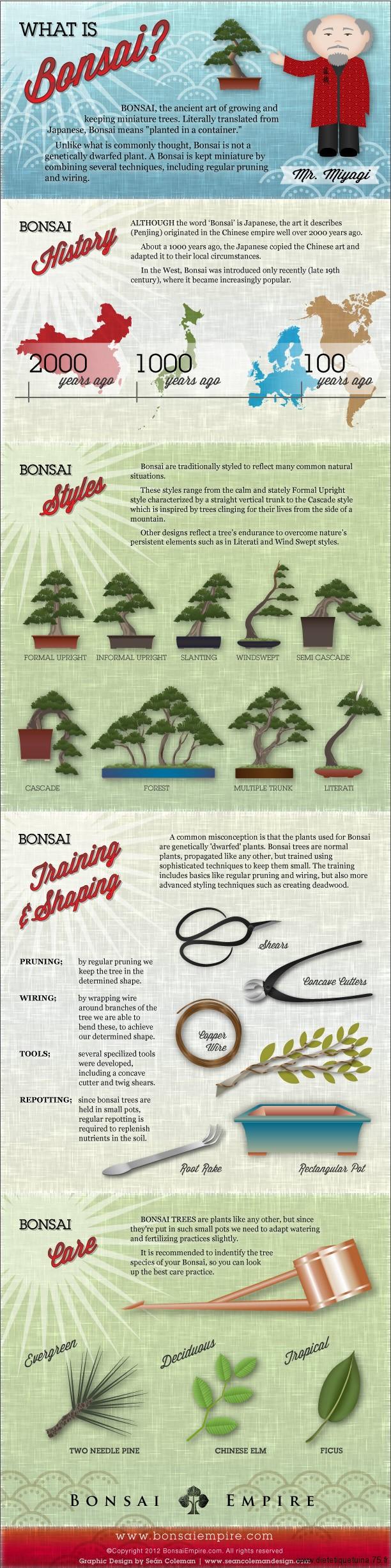 Fiche sur les bonsais