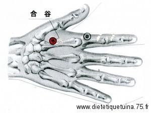 Point d'acupuncture du méridien du gros intestin