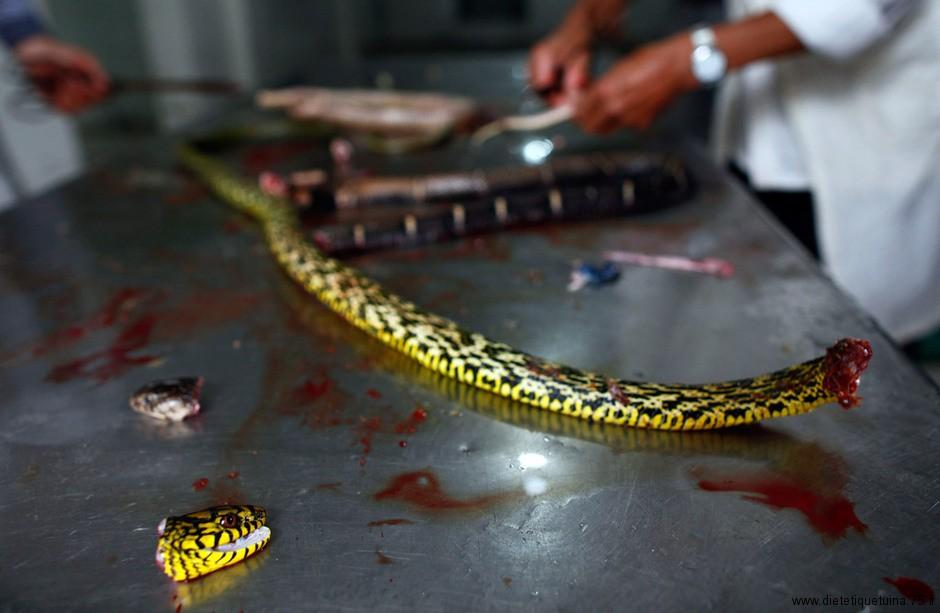 couper la tête du serpent avant de le manger