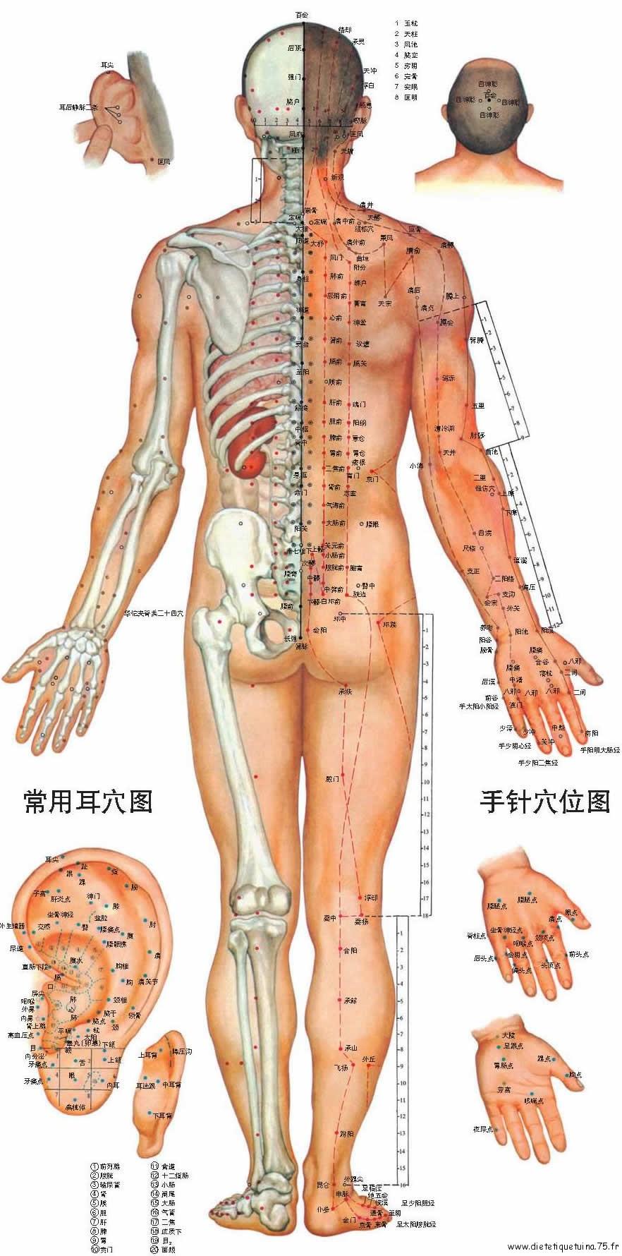 Méridiens et mesures en Cun, corps de dos