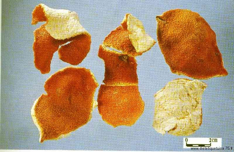 Chen Pi est la peau de mandarine selon la pharmacopéé chinoise
