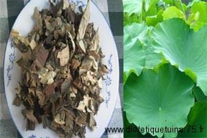 Feuille de lotus pour la médecine chinoise