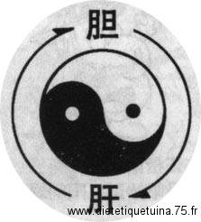 La vésicule biliaire Yang et le foie Yin
