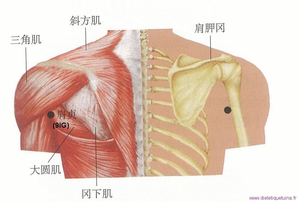 Emplacement anatomique