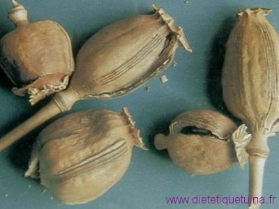 Capsule du pavot à opium
