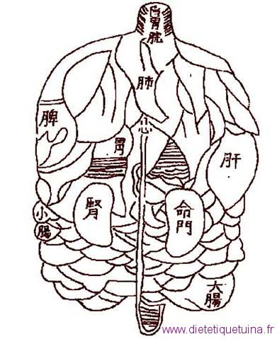 Les organes tous ensemble