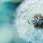 Herbes qui clarifient la chaleur et éliminent la toxicité