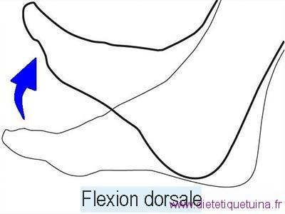 exemple de flexion dorsale