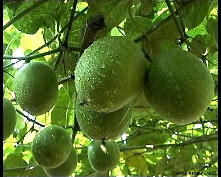 Le fruit de Siraitia Grosvenorii non séché