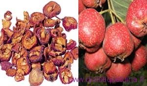fruits séchés de l'aubépine