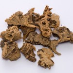 Le rhizome Gao Ben (Ligusticum sinense)