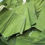 Les feuilles de lotus (He Ye) dans la pharmacopée chinoise