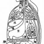 Récapitulatif de la relation entre les organes et les entrailles