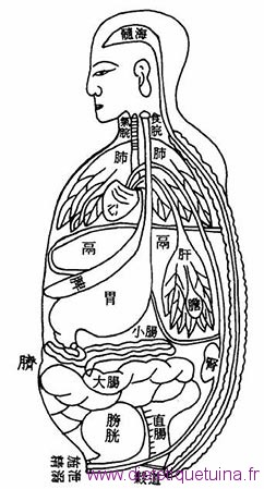 photos traditionnelle des organes