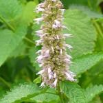 Herbes aromatiques qui transforment l