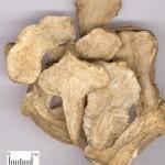 Le rhizome d'atractyle (Bai Zhu) en médecine chinoise