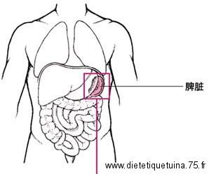 Organes et entrailles du corps