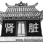 Les reins selon la médecine chinoise