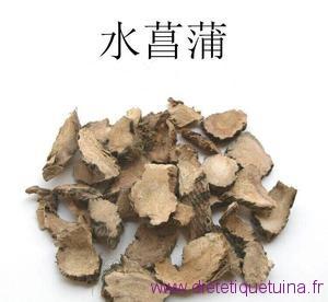 Rhizome de l'acore odorant