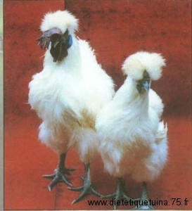 Poulet spécial en Chine