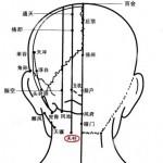 Le point Tian Zhu du méridien de la vessie (10V)