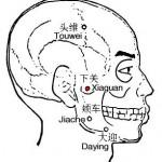 Le point Xia Guan du méridien de l'estomac (7E)